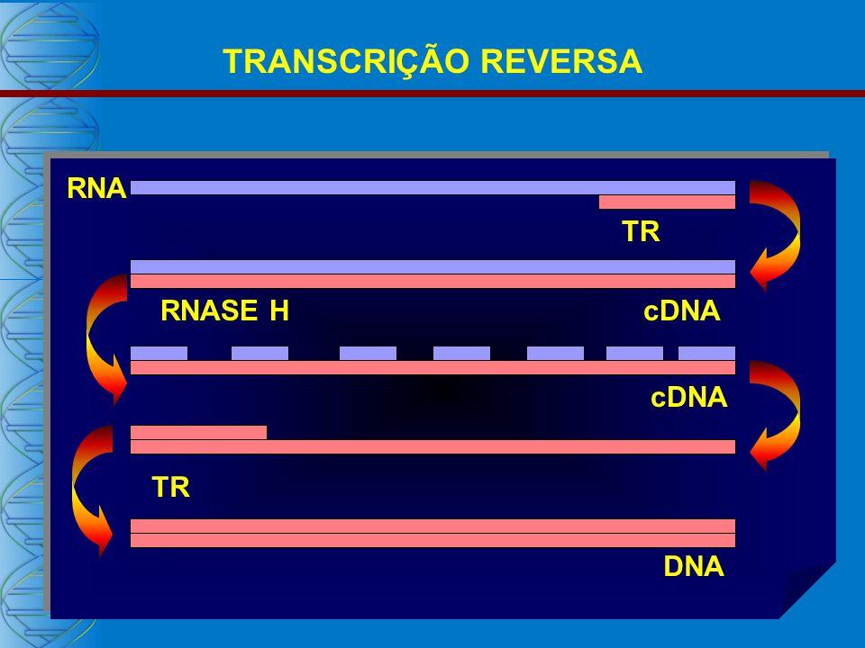 RNA cDNA DNA cDNA TR RNASE H TR TRANSCRIÇÃO REVERSA