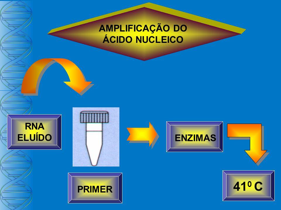 PRIMER RNA ELUÍDO AMPLIFICAÇÃO DO ÁCIDO NUCLEICO ENZIMAS 41 0 C