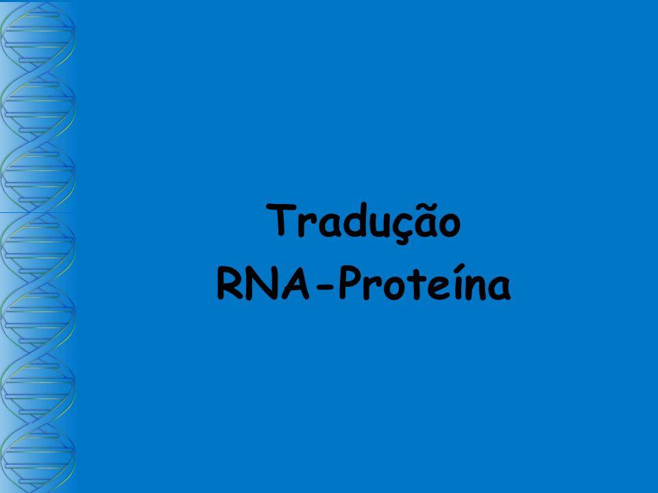 Tradução RNA-Proteína