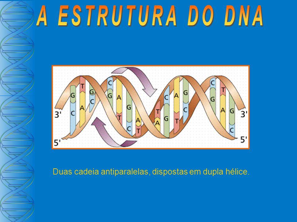 Os hormônios esteróides difundem-se pela membrana e ligam- se a receptores citoplasmáticos que estimula a transcrição de genes alvo