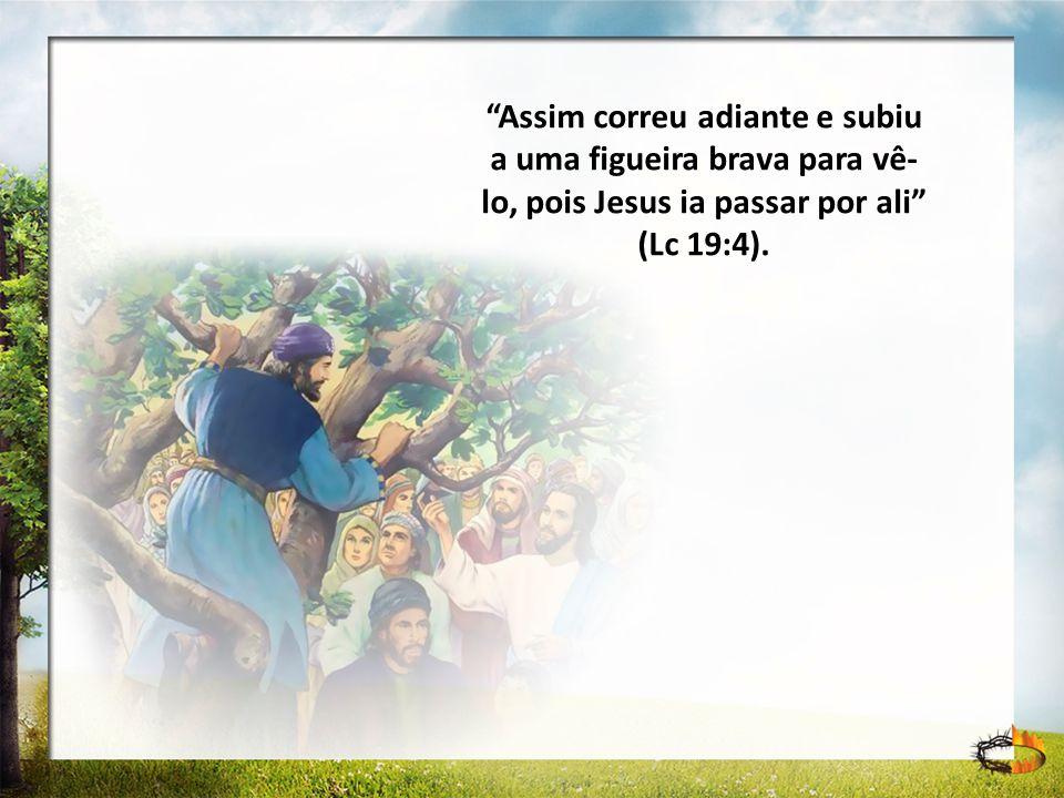 Assim correu adiante e subiu a uma figueira brava para vê- lo, pois Jesus ia passar por ali (Lc 19:4).