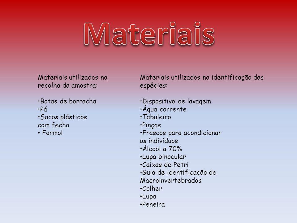 Materiais utilizados na recolha da amostra: Botas de borracha Pá Sacos plásticos com fecho Formol Materiais utilizados na identificação das espécies:
