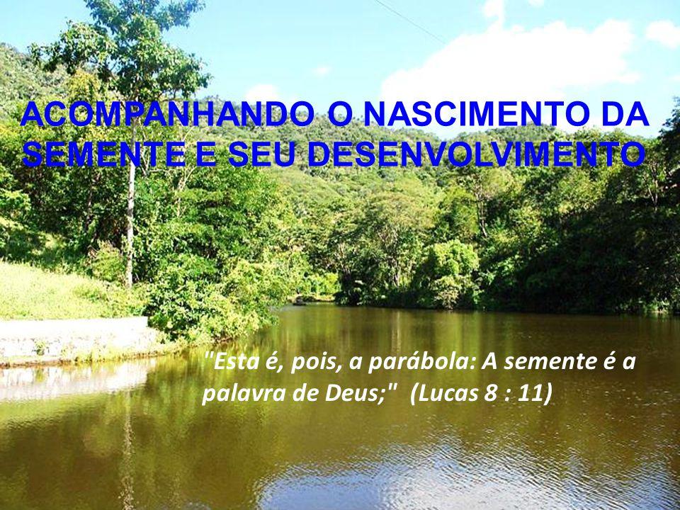 Álbum de fotografias por Zeno ACOMPANHANDO O NASCIMENTO DA SEMENTE E SEU DESENVOLVIMENTO Esta é, pois, a parábola: A semente é a palavra de Deus; (Lucas 8 : 11)