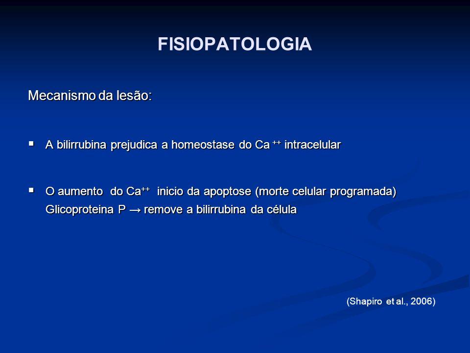 FISIOPATOLOGIA Mecanismo da lesão: A bilirrubina prejudica a homeostase do Ca ++ intracelular A bilirrubina prejudica a homeostase do Ca ++ intracelul
