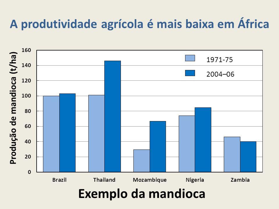 Exemplo da mandioca A produtividade agrícola é mais baixa em África Produção de mandioca (t/ha)