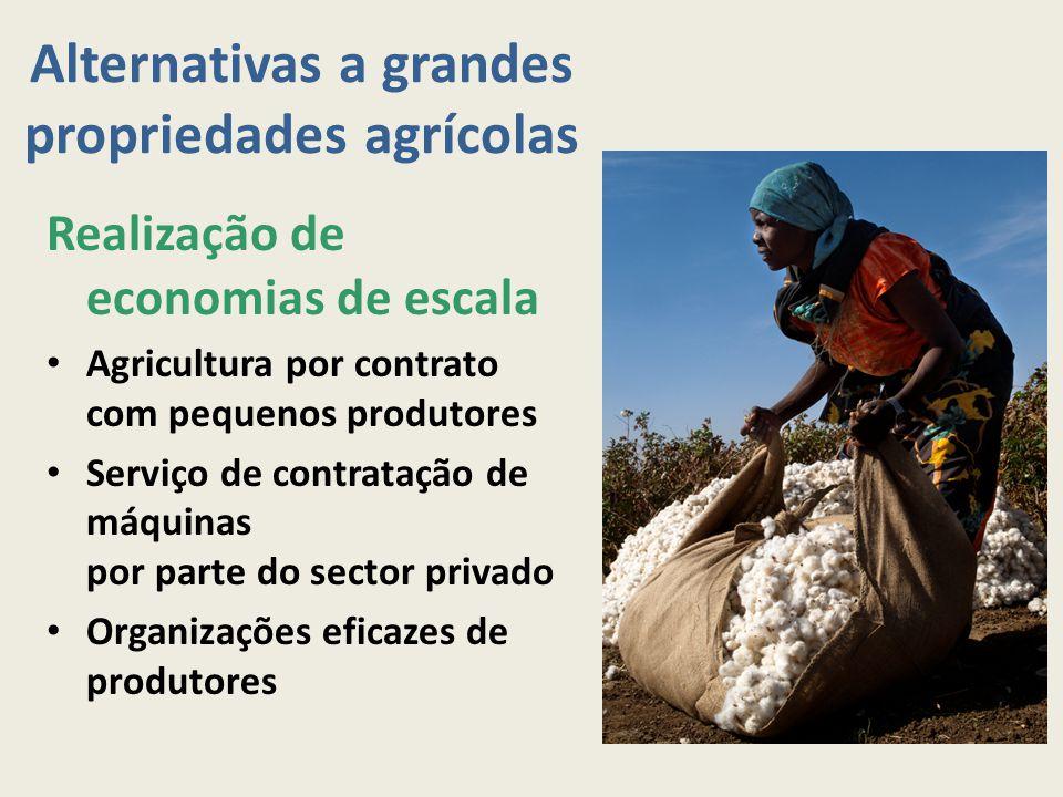 Alternativas a grandes propriedades agrícolas Realização de economias de escala Agricultura por contrato com pequenos produtores Serviço de contrataçã