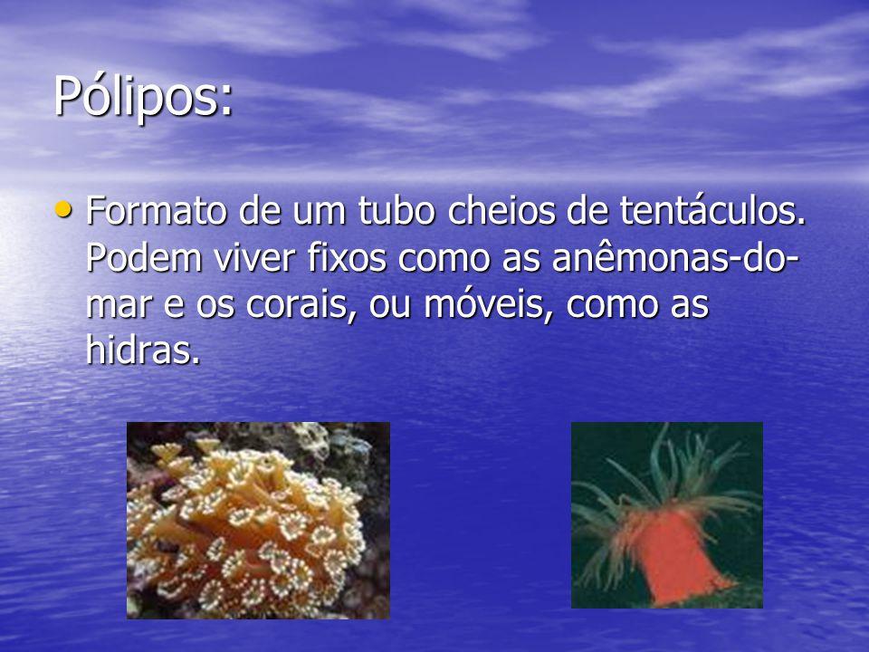 Pólipos: Formato de um tubo cheios de tentáculos. Podem viver fixos como as anêmonas-do- mar e os corais, ou móveis, como as hidras. Formato de um tub