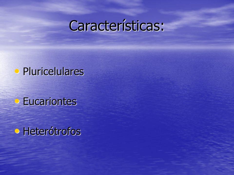 Características: Pluricelulares Pluricelulares Eucariontes Eucariontes Heterótrofos Heterótrofos