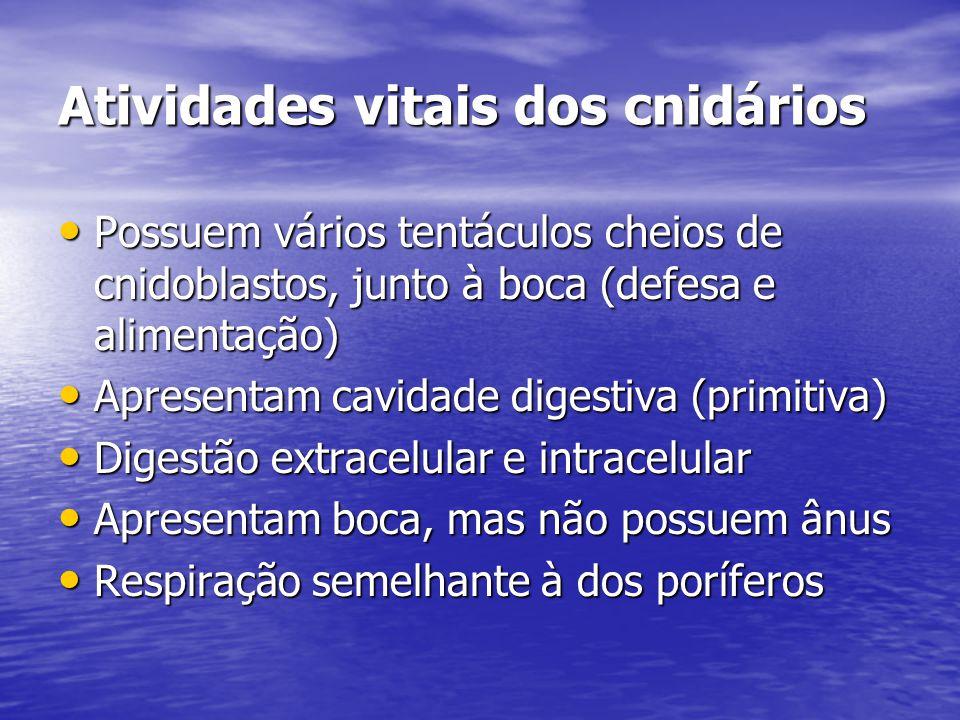 Atividades vitais dos cnidários Possuem vários tentáculos cheios de cnidoblastos, junto à boca (defesa e alimentação) Possuem vários tentáculos cheios