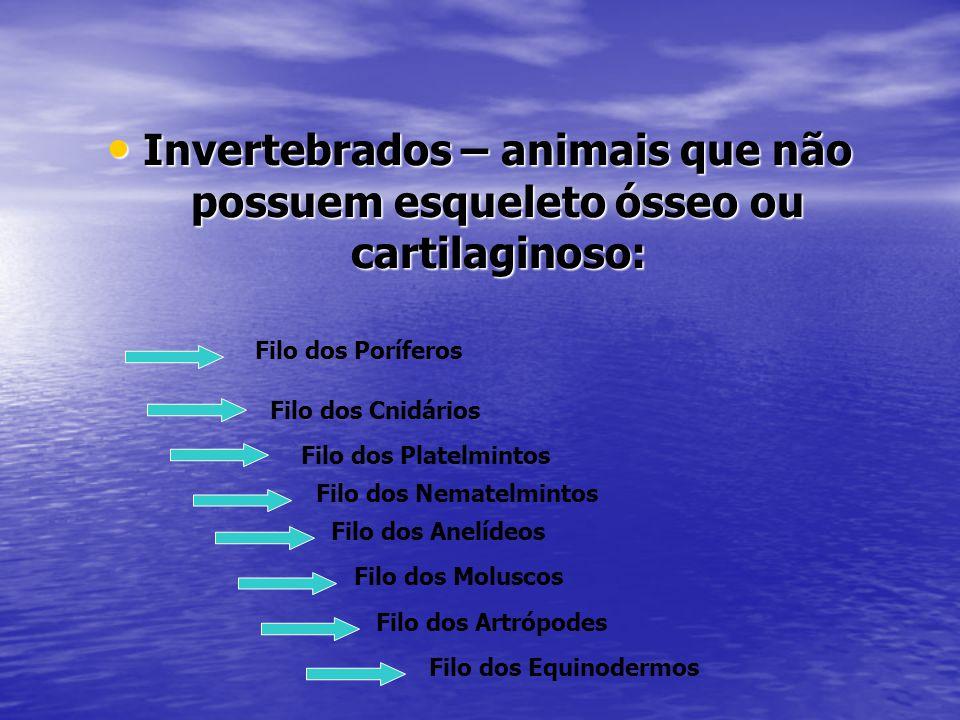 Invertebrados – animais que não possuem esqueleto ósseo ou cartilaginoso: Invertebrados – animais que não possuem esqueleto ósseo ou cartilaginoso: Fi