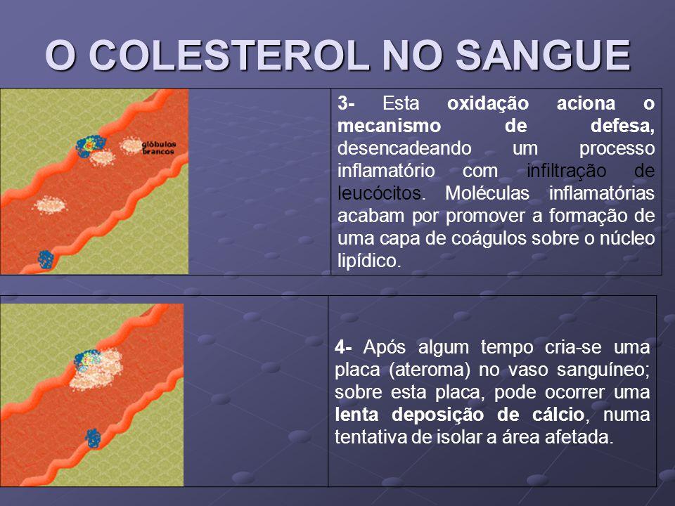 O COLESTEROL NO SANGUE 3- Esta oxidação aciona o mecanismo de defesa, desencadeando um processo inflamatório com infiltração de leucócitos. Moléculas