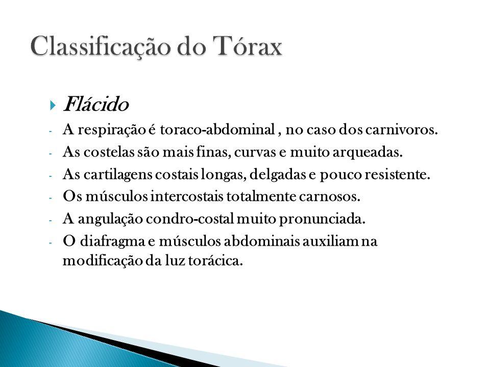 Flácido - A respiração é toraco-abdominal, no caso dos carnivoros.