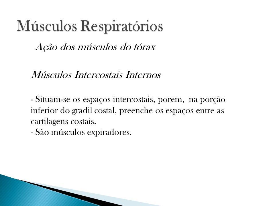 Músculos Intercostais Internos - Situam-se os espaços intercostais, porem, na porção inferior do gradil costal, preenche os espaços entre as cartilagens costais.