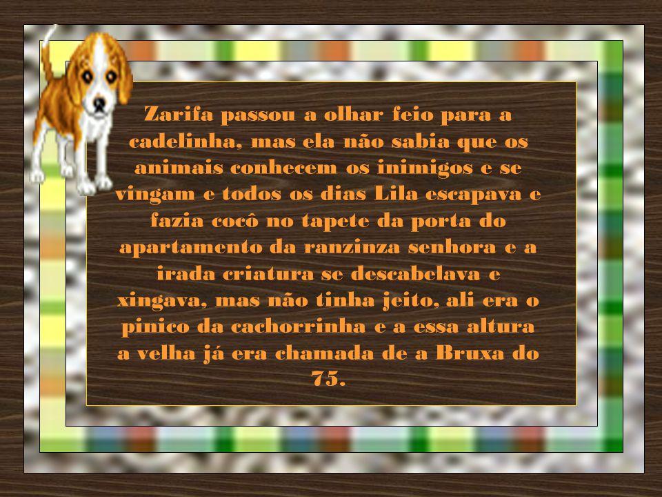 Zarifa passou a olhar feio para a cadelinha, mas ela não sabia que os animais conhecem os inimigos e se vingam e todos os dias Lila escapava e fazia cocô no tapete da porta do apartamento da ranzinza senhora e a irada criatura se descabelava e xingava, mas não tinha jeito, ali era o pinico da cachorrinha e a essa altura a velha já era chamada de a Bruxa do 75.