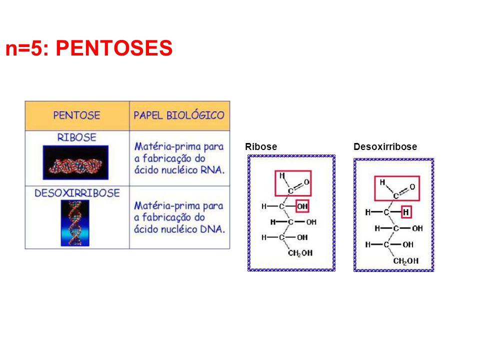 Ribose Desoxirribose n=5: PENTOSES