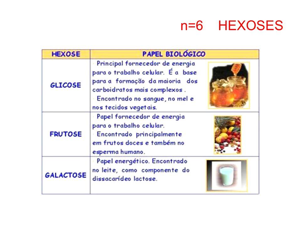 n=6 HEXOSES