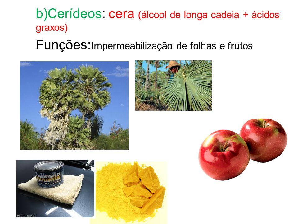 b)Cerídeos: cera (álcool de longa cadeia + ácidos graxos) Funções: Impermeabilização de folhas e frutos