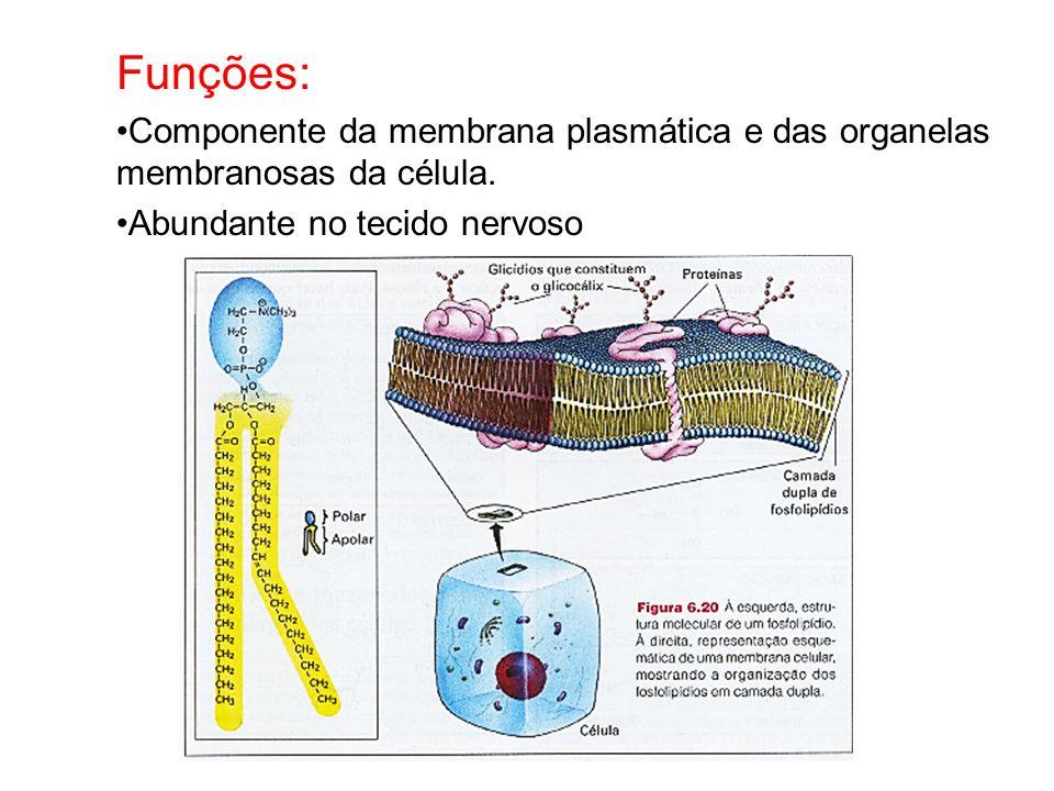 Funções: Componente da membrana plasmática e das organelas membranosas da célula.
