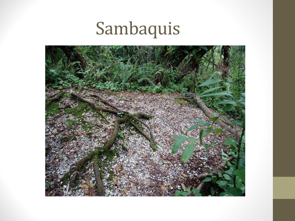ORGANIZAÇÃO SOCIAL: TRIBO abrangente porque variava em termos numéricos; poderia reunir várias aldeias e controlar extenso território; Havia um poder político: GUERREIROS, XAMÃS (curandeiros, pajés em tupi-guarani); Algumas tribos se dividiam em CLÃS (Grupo que se reúne por parentesco e linhagem que é definido pela descendência de um ancestral comum); ANTROPOFAGIA ESPÍRITO CANIBAL (ritual usado quando o guerreiro inimigo era vencido.