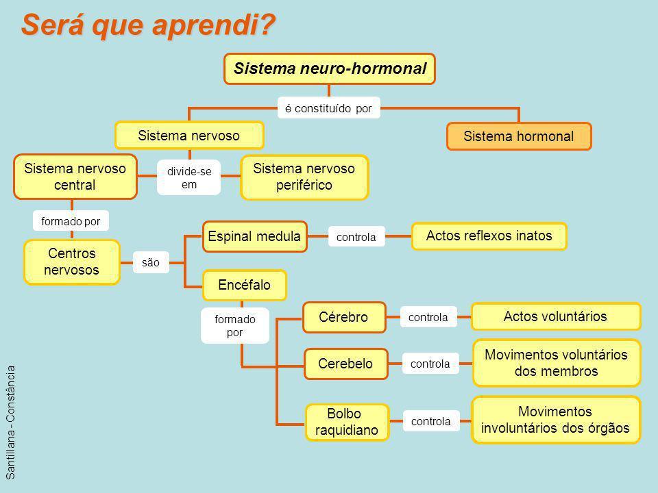 Será que aprendi? Sistema neuro-hormonal é constituído por Sistema hormonal Sistema nervoso central formado por são Espinal medula controla Cérebro co