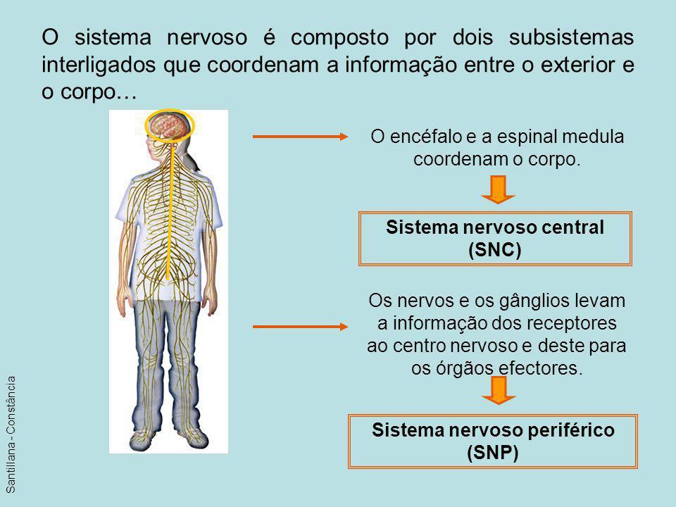 O sistema nervoso é composto por dois subsistemas interligados que coordenam a informação entre o exterior e o corpo… O encéfalo e a espinal medula co