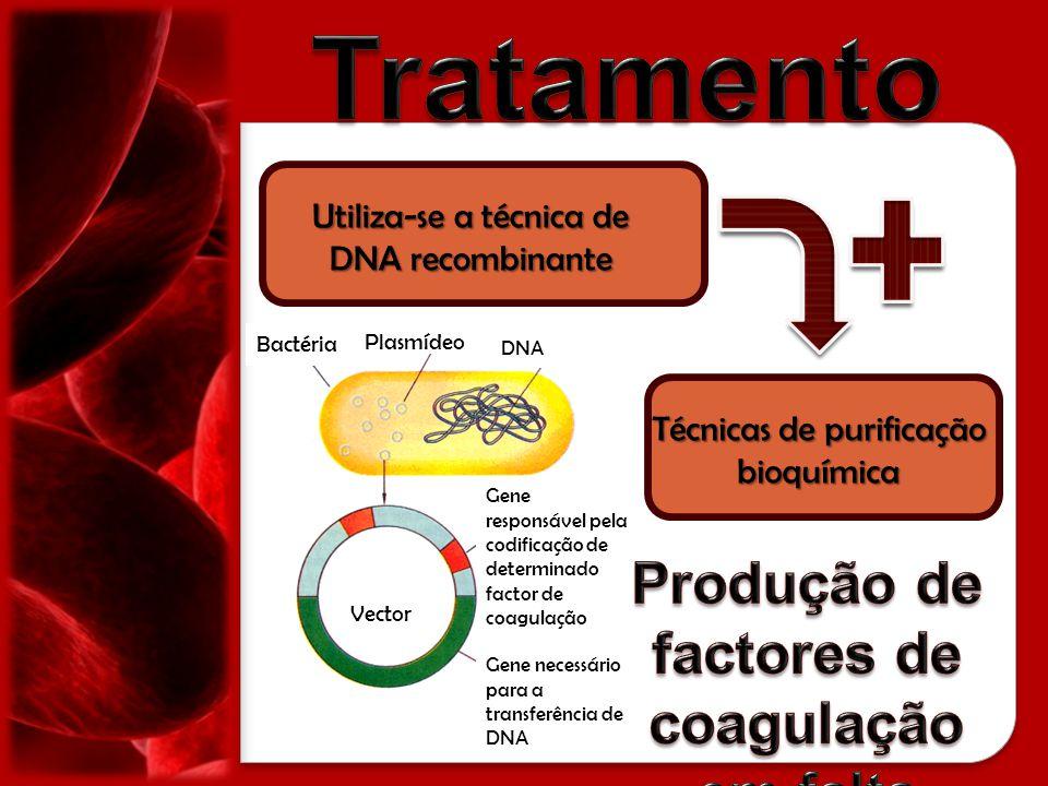 Bactéria Plasmídeo DNA Vector Gene responsável pela codificação de determinado factor de coagulação Gene necessário para a transferência de DNA Utiliz