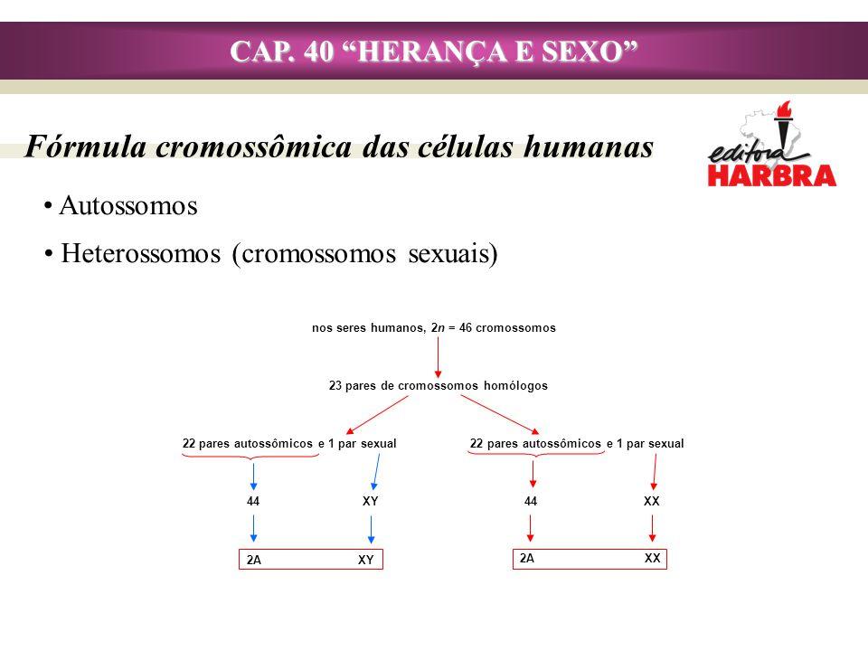 CAP. 40 HERANÇA E SEXO Autossomos Fórmula cromossômica das células humanas nos seres humanos, 2n = 46 cromossomos 23 pares de cromossomos homólogos 22
