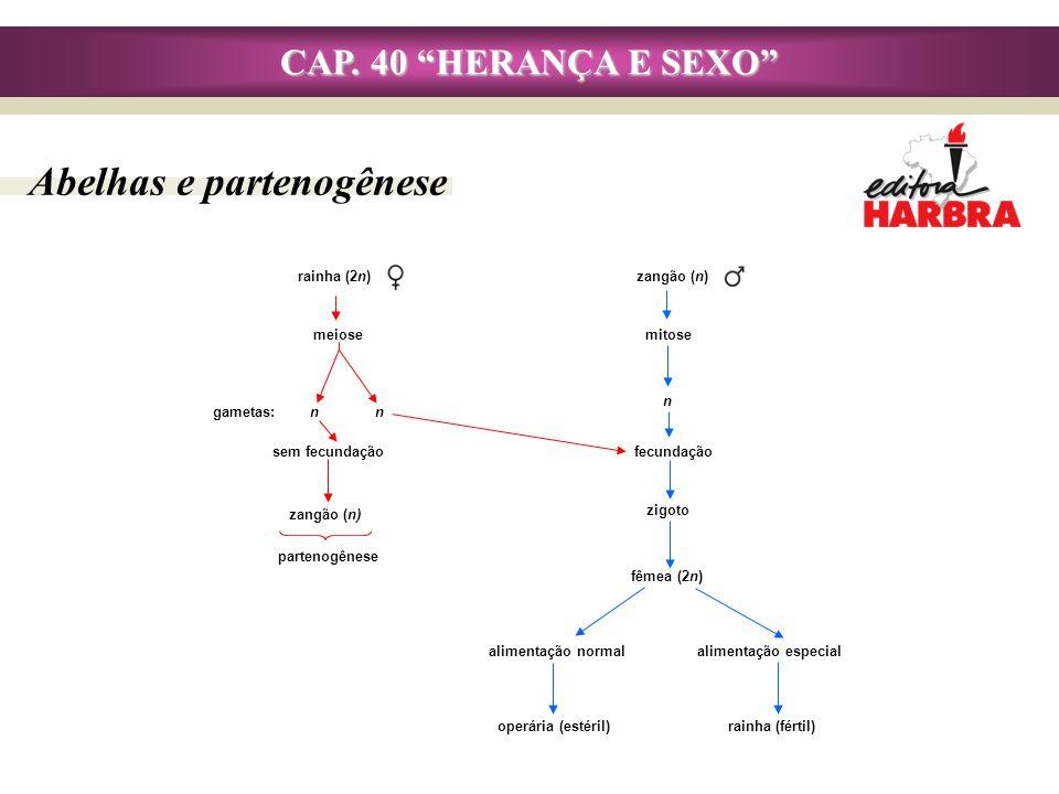 CAP. 40 HERANÇA E SEXO Abelhas e partenogênese gametas: n n rainha (fértil)operária (estéril) alimentação especialalimentação normal partenogênese zan