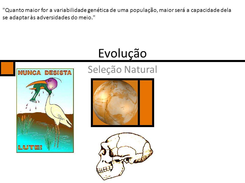 Evolução Seleção Natural