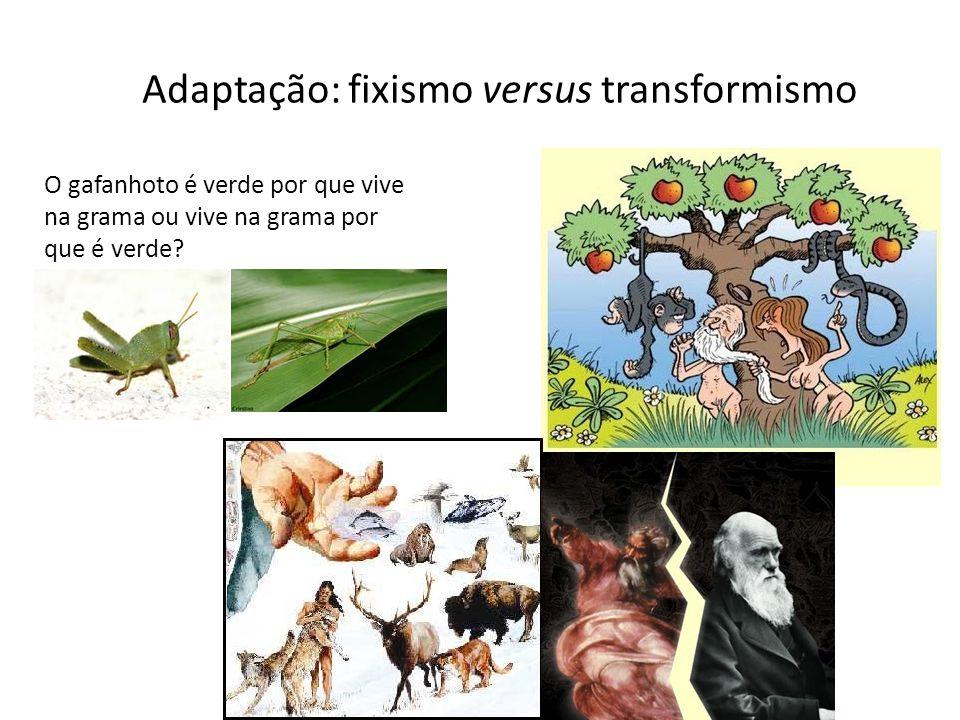 Adaptação: fixismo versus transformismo O gafanhoto é verde por que vive na grama ou vive na grama por que é verde?