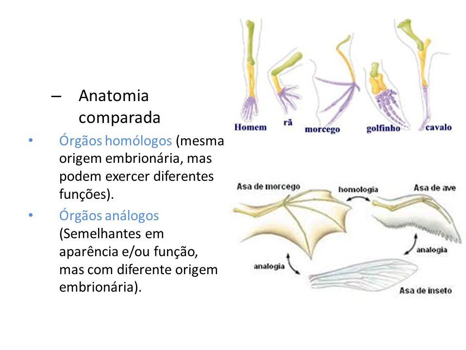 – Anatomia comparada Órgãos homólogos (mesma origem embrionária, mas podem exercer diferentes funções). Órgãos análogos (Semelhantes em aparência e/ou