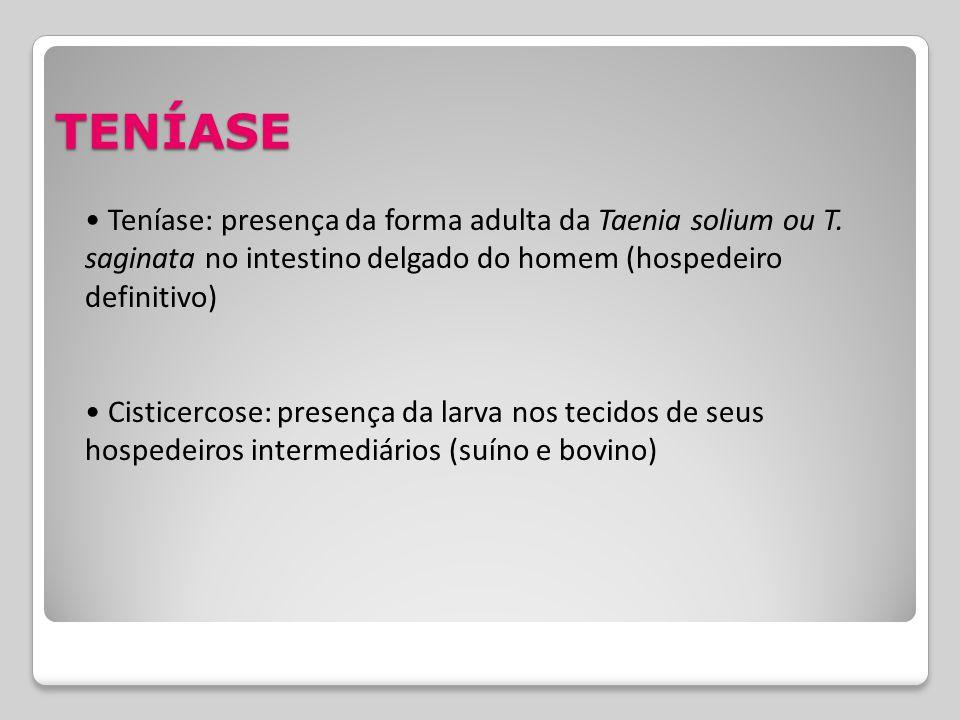TENÍASE Teníase: presença da forma adulta da Taenia solium ou T. saginata no intestino delgado do homem (hospedeiro definitivo) Cisticercose: presença