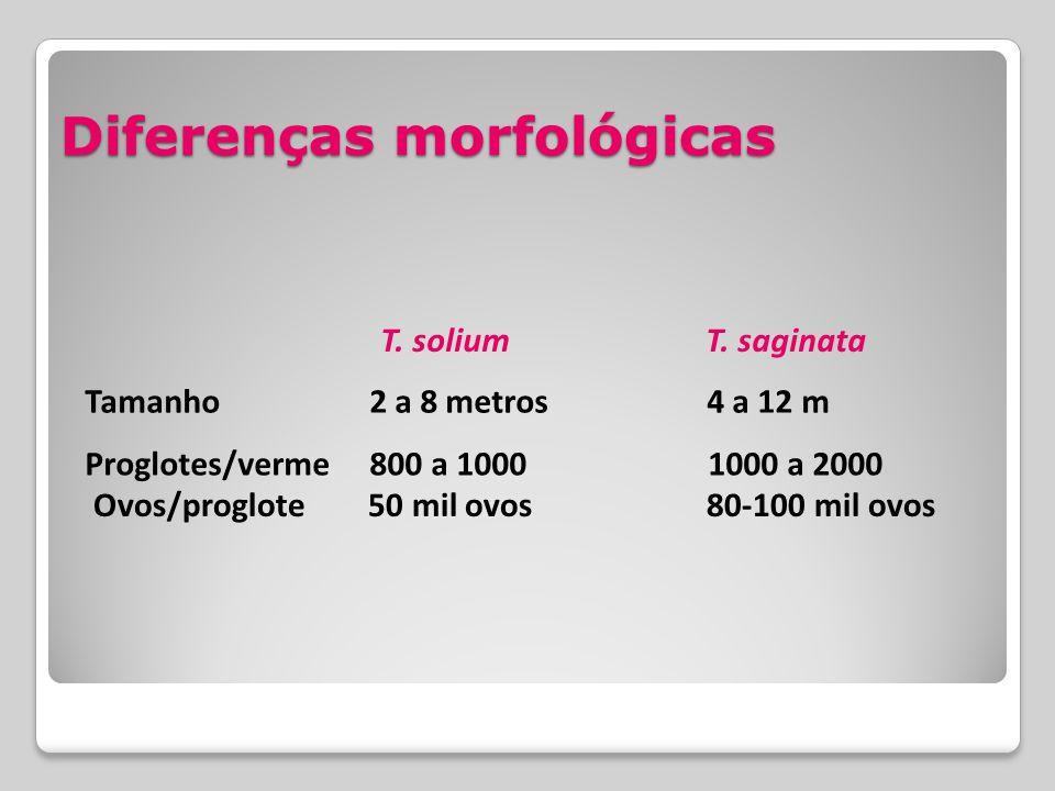 Diferenças morfológicas Tamanho 2 a 8 metros 4 a 12 m Proglotes/verme 800 a 1000 1000 a 2000 Ovos/proglote 50 mil ovos 80-100 mil ovos T. solium T. sa