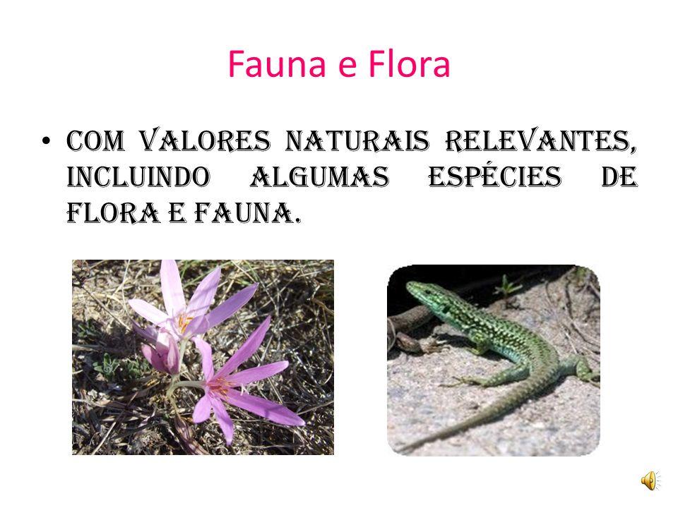 Fauna e Flora Com valores naturais relevantes, incluindo algumas espécies de flora e FAUNA.