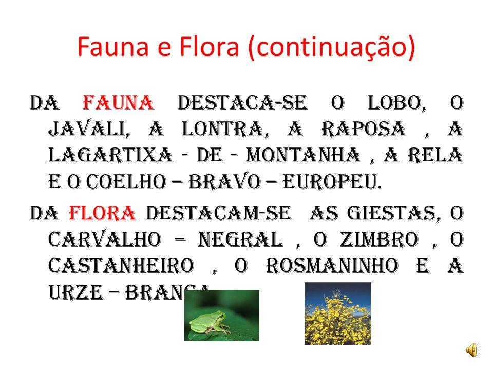 Fauna e Flora (continuação) DA fauna destaca-se o lobo, o javali, a lontra, a raposa, a lagartixa - de - montanha, a rela e o coelho – bravo – europeu.