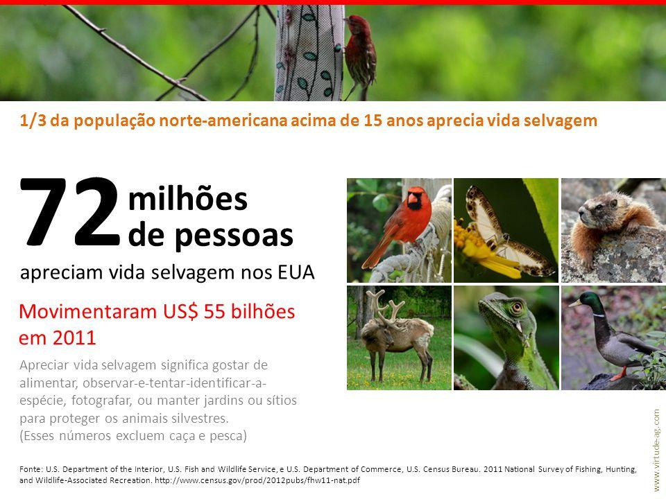 www.virtude-ag.com 1/3 da população norte-americana acima de 15 anos aprecia vida selvagem As aves são os animais mais fáceis de serem vistos, são carismáticas, despertam empatia, e têm grande diversidade de formas e cores.