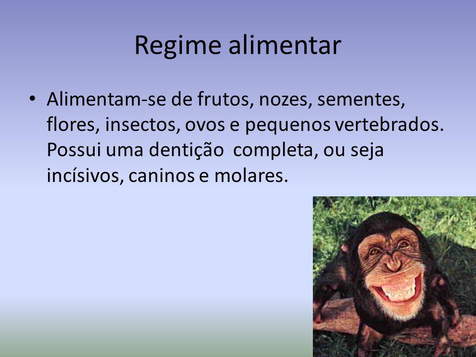 Regime alimentar Alimentam-se de frutos, nozes, sementes, flores, insectos, ovos e pequenos vertebrados.