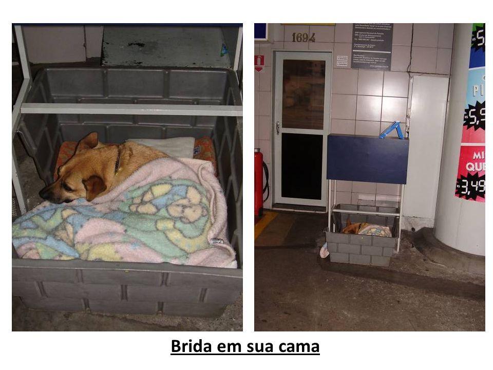Textos e fotos: Halem Guerra Nery (Exceto foto do site do Posto Paraíso) Instituto Ambiental Ecosul E-mail: halemecosul@gmail.comhalemecosul@gmail.com Florianópolis/SC Novembro/2010