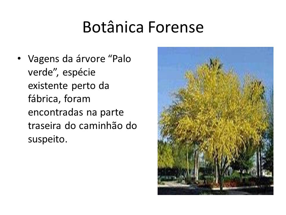 Botânica Forense Vagens da árvore Palo verde, espécie existente perto da fábrica, foram encontradas na parte traseira do caminhão do suspeito.