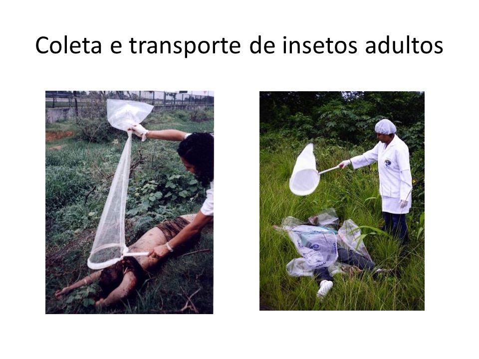 Coleta e transporte de insetos adultos