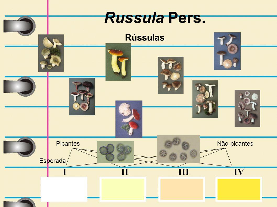 IIIVIIII Esporada Russula Pers. Rússulas Picantes Não-picantes