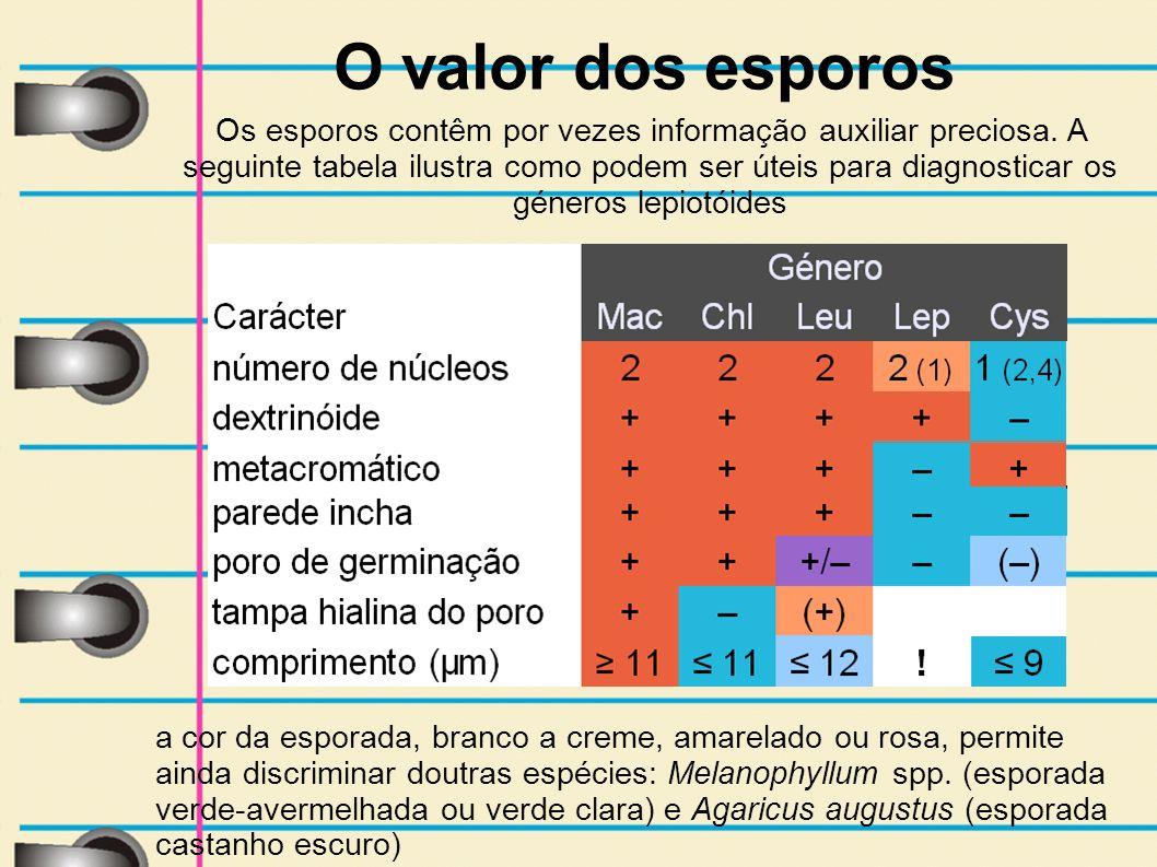 O valor dos esporos Os esporos contêm por vezes informação auxiliar preciosa. A seguinte tabela ilustra como podem ser úteis para diagnosticar os géne