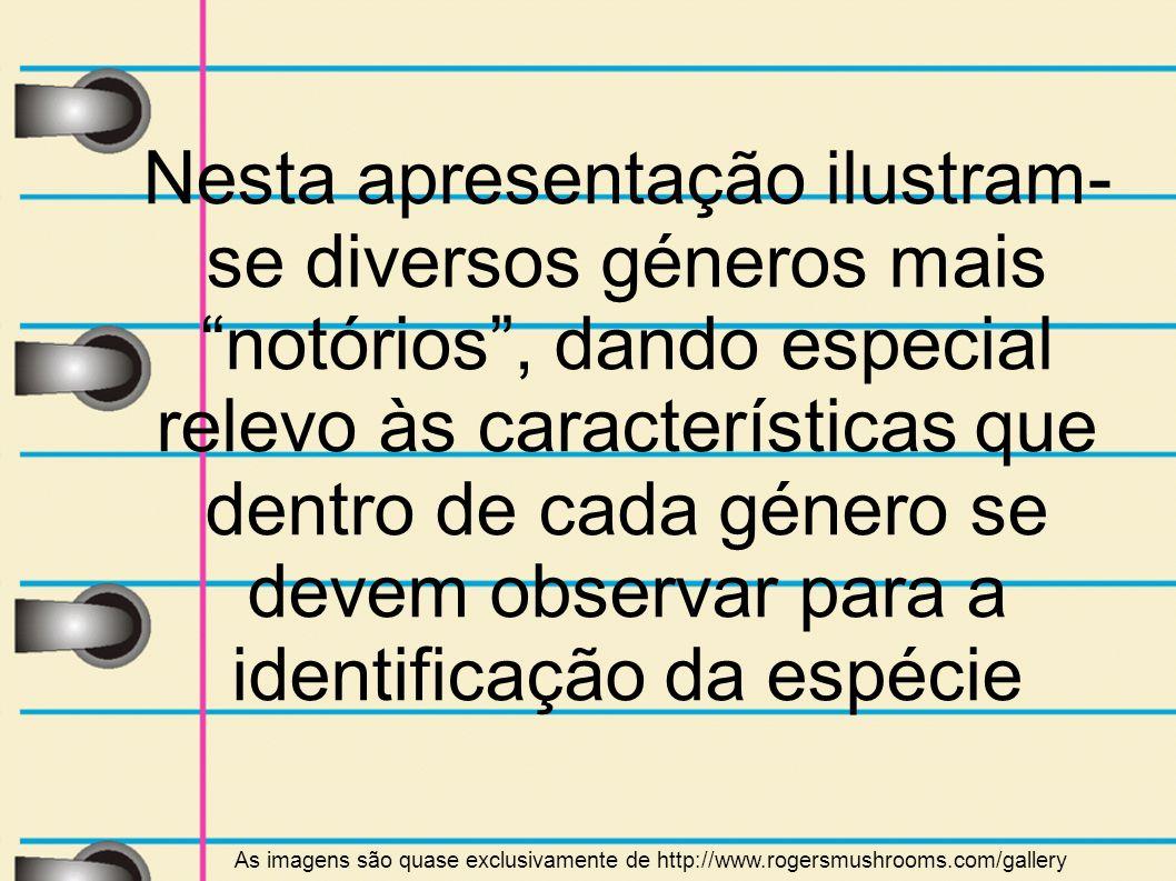 Nesta apresentação ilustram- se diversos géneros mais notórios, dando especial relevo às características que dentro de cada género se devem observar p