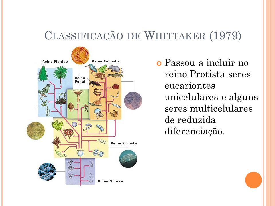 C LASSIFICAÇÃO DE W HITTAKER (1979) Passou a incluir no reino Protista seres eucariontes unicelulares e alguns seres multicelulares de reduzida diferenciação.