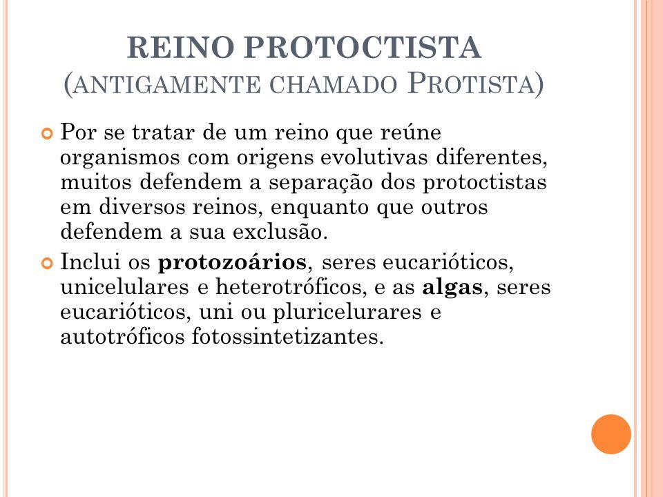 REINO PROTOCTISTA ( ANTIGAMENTE CHAMADO P ROTISTA ) Por se tratar de um reino que reúne organismos com origens evolutivas diferentes, muitos defendem a separação dos protoctistas em diversos reinos, enquanto que outros defendem a sua exclusão.