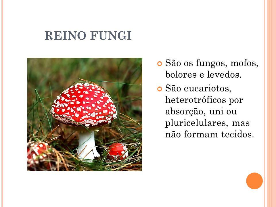 REINO FUNGI São os fungos, mofos, bolores e levedos.