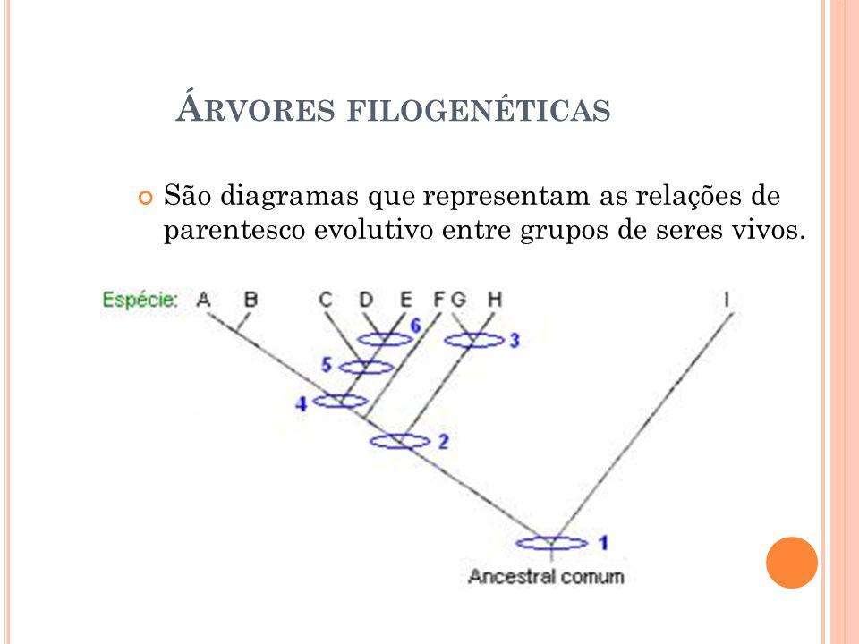 Á RVORES FILOGENÉTICAS São diagramas que representam as relações de parentesco evolutivo entre grupos de seres vivos.