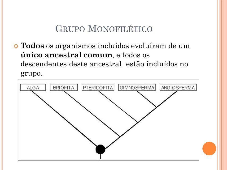 G RUPO M ONOFILÉTICO Todos os organismos incluídos evoluíram de um único ancestral comum, e todos os descendentes deste ancestral estão incluídos no grupo.