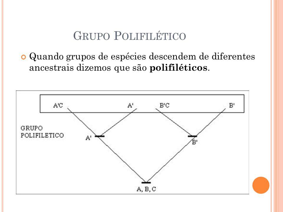 G RUPO P OLIFILÉTICO Quando grupos de espécies descendem de diferentes ancestrais dizemos que são polifiléticos.