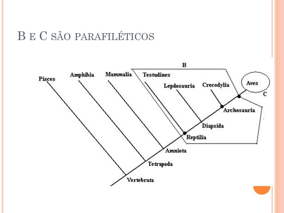 B E C SÃO PARAFILÉTICOS